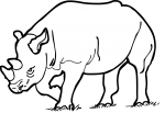Rhinoceros freehand drawings