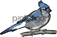 Jay BlueFreehand Image