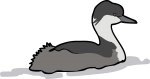 Junin Grebe freehand drawings