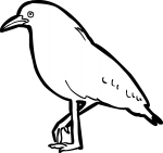 Kagu freehand drawings
