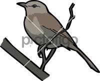 Kalahari Scrub RobinFreehand Image