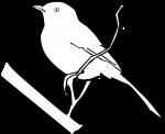 Kalahari Scrub Robin freehand drawings