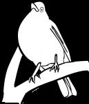 Karoo Thrush freehand drawings