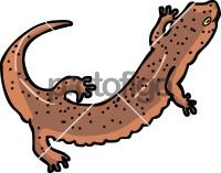 SalamanderFreehand Image