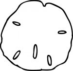 Sand Dollar freehand drawings