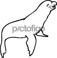 Sea LionFreehand Image