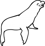 Sea Lion freehand drawings