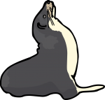 Sea Lion freehand drawings
