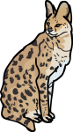 Serval freehand drawings