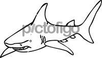 SharkFreehand Image
