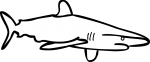 Shark freehand drawings