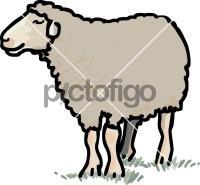 SheepFreehand Image