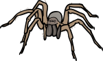 Spider freehand drawings