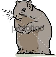 SquirrelFreehand Image
