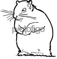 SquirrelFreehand Image