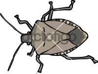 StinkbugFreehand Image