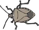 Stinkbug freehand drawings