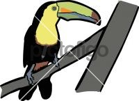 Keel Billed ToucanFreehand Image