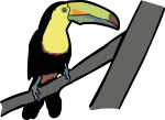 Keel Billed Toucan freehand drawings