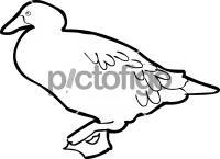 Kelp Goose ToucanFreehand Image