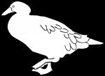 Kelp Goose Toucan