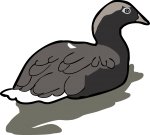 Kelp Goose Toucan freehand drawings