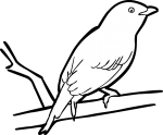 Lance Tailed Manakin freehand drawings