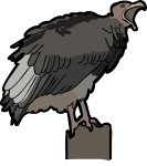 Lappet Faced Vulture freehand drawings