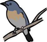 Large Blue Flycatcher freehand drawings