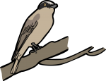 Large Woodshrike freehand drawings