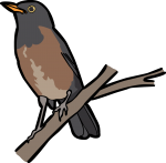 La Selle Thrush freehand drawings
