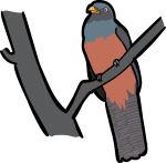 Lattice Tailed Trogon freehand drawings