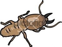 TermiteFreehand Image