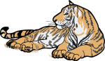 Tiger freehand drawings