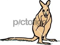 WallabyFreehand Image