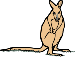 Wallaby freehand drawings
