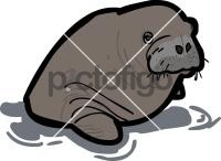 WalrusFreehand Image