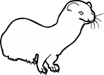 Weasel freehand drawings