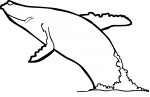 Whale freehand drawings