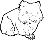 Wombat freehand drawings