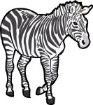 Zebra freehand drawings