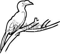 Luzon HornbillFreehand Image