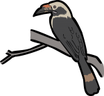 Luzon Hornbill freehand drawings