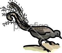LyrebirdFreehand Image
