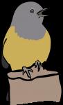 MacGillivrays Warbler freehand drawings