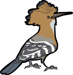 Madagascar Hoopoe freehand drawings