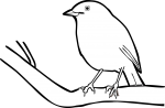 Madagascar Magpie Robin freehand drawings