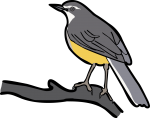 Madagascar Wagtail freehand drawings