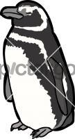 Magellanic PenguinFreehand Image
