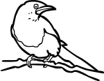 Magpie freehand drawings